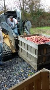 apple processing