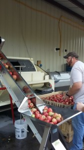 apple processing 7
